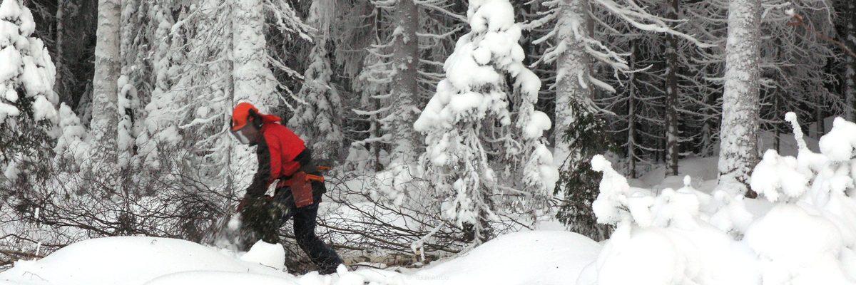 Metsätöitä talvella. Lattiaklankkuja.